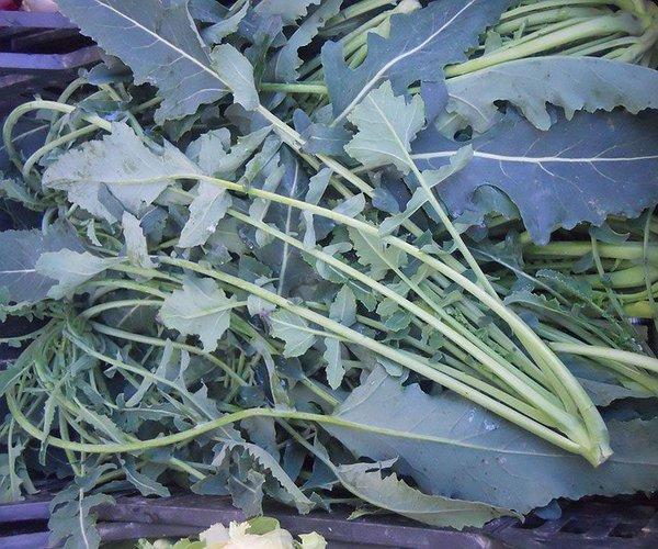 Il Broccolo fiolaro è una varietà di broccolo inserita nell'elenco dei prodotti tipici veneti.