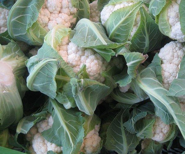 Il cavolfiore è una varietà di brassica oleracea L. var. botrytis che in veneto, solitamente, si coltiva da fine settembre a fine dicembre perché le basse temperature possono rovinarlo, ne esistono comunque varietà primaverili ed estive.