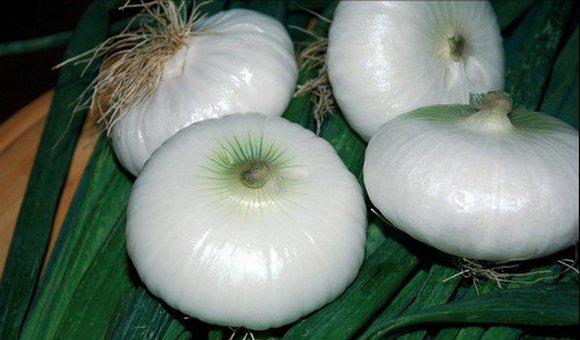 cipolla: rossa, bianca, dorata, piatta bianca e fiascona
