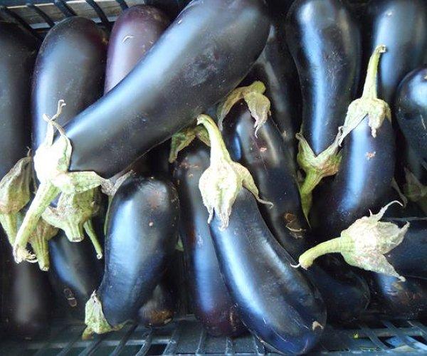 """In Caresà produciamo le tre varietà: lunga, tonda e viola tonda. Ne trapiantiamo in serra a fine marzo per """"tentare"""" l'anticipo a giugno e poi a pieno campo."""