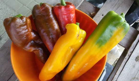 peperone a corno rosso e giallo