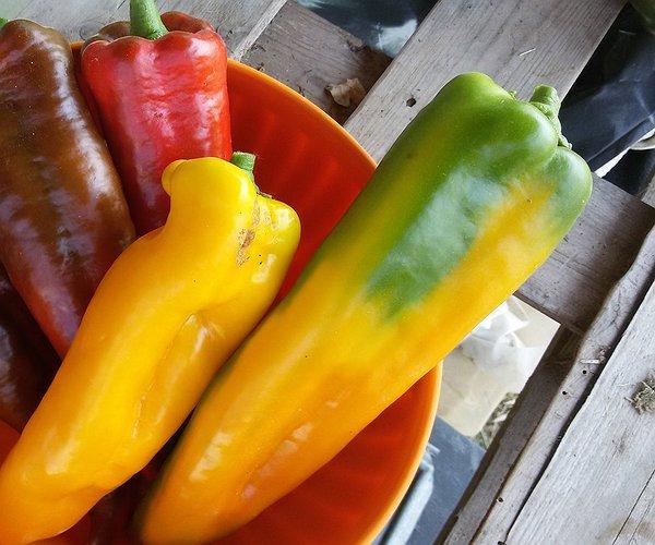 Noi di Caresà coltiviamo la varietà a corno sia rosso che giallo, sia in serra che a pieno campo.