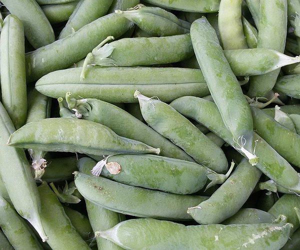 I piselli sono una pianta erbacea annuale appartenente alla famiglia Fabaceae.