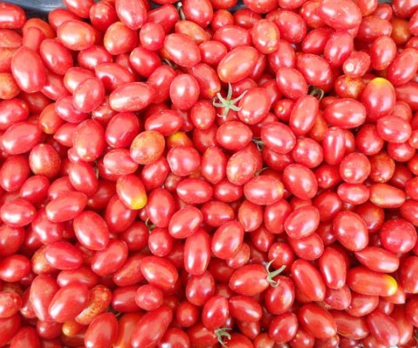 Pomodoro a grappolo con frutti di piccole dimensioni dalla forma allungata.