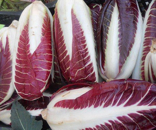 La pianta del radicchio (Chicorium Intybus) appartiene alla famiglia delle Composite - gruppo delle cicorie – come tale è ricca di sali minerali tra cui: calcio, potassio, fosforo e di vitamine in particolare A e C.