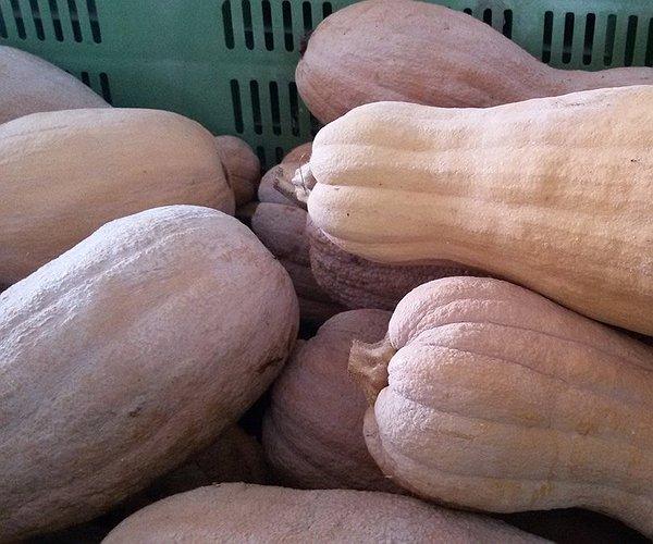 La zucca varietà Violina dalla caratteristica forma allungata, con i semi presenti solo in una parte del frutto, tagliata a fette è adatta anche per fritture.