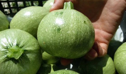 Zucchine tonde