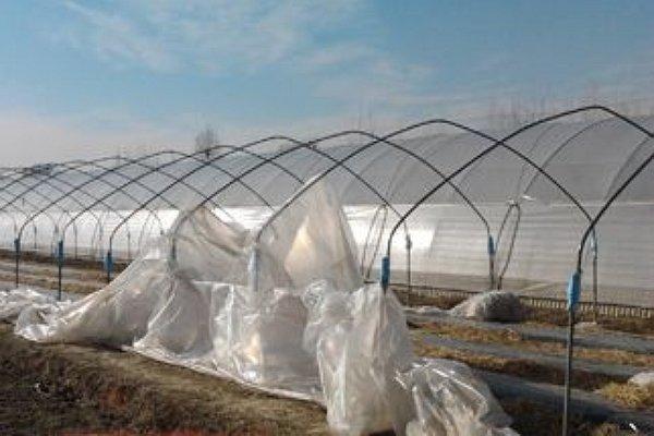 Le nostre serre mercoledì 8 febbraio 2012 dopo il passaggio del forte vento