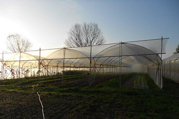 Serra con effetto nebbia