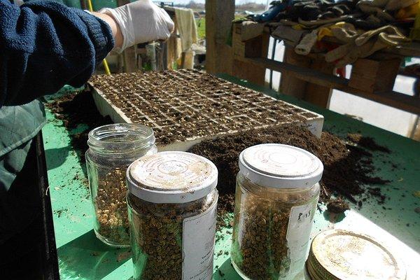 Si preparano i pateaux inserendo a mano cinque o sei semini per ogni foro nel quale c'è già terriccio universale biologico.