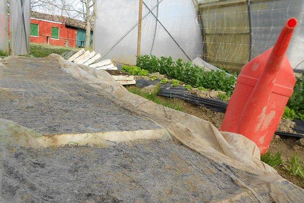 Poi si copre con tessuto non tessuto per irrigare senza compattare il terreno.