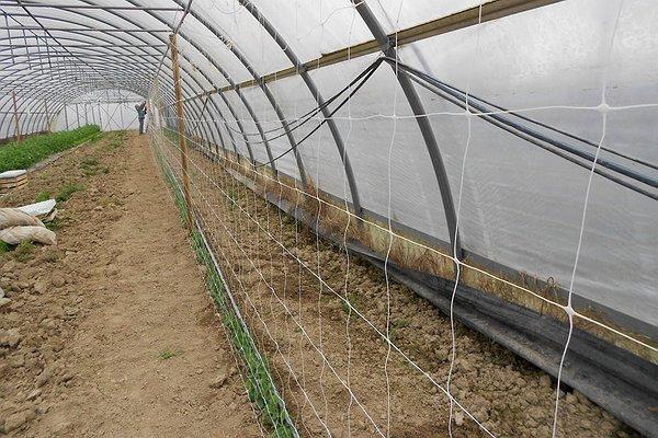 16 marzo 2015 - Stiamo predisponendo la struttura che sosterrà la seconda semina di piselli varietà a mezza rama denominata Utrillo