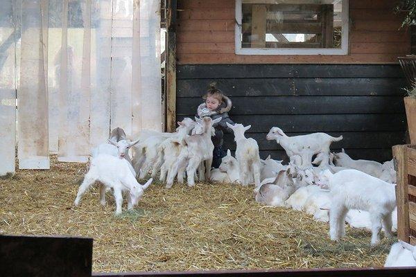 care farm Geitenboerderij Ridammerhoeve