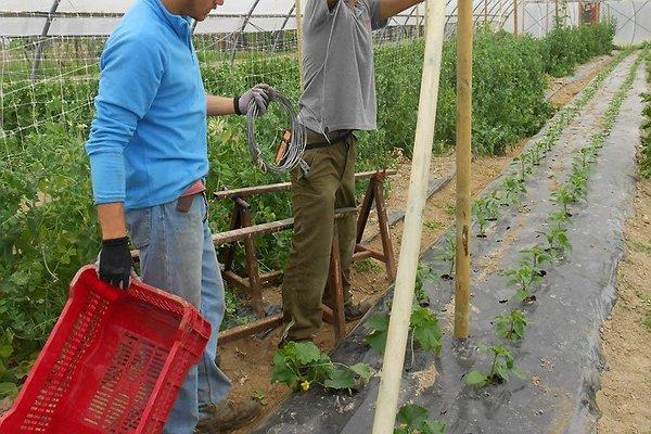 Costruzione impianto per piantine cetrioli