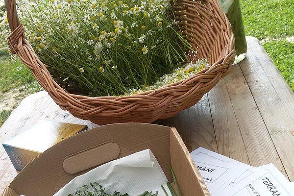 """Caresà a campo aperto: laboratorio """"Essiccare le piante aromatiche"""""""