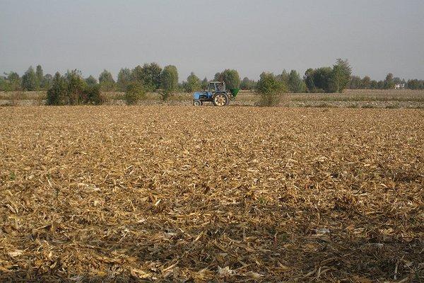 Semina e sovescio - Ottobre 2008