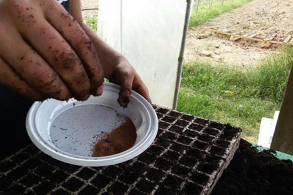 semina a mano in plateaux - 8 luglio 2015