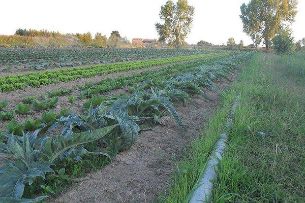 La terra che coltiviamo