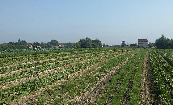 I campi a fine agosto: tanti ortaggi diversi e mille tonalità di verde!