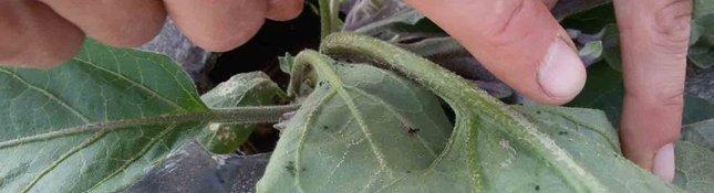 Erbe infestanti e insetti. Lezione orto familiare bio di sabato 7 maggio 2016