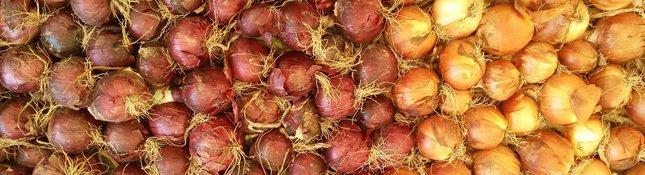 Le mille sfumature delle cipolle rosse e dorate