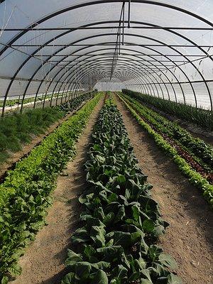 Quale agricoltura per la tutela e la valorizzazione del territorio?