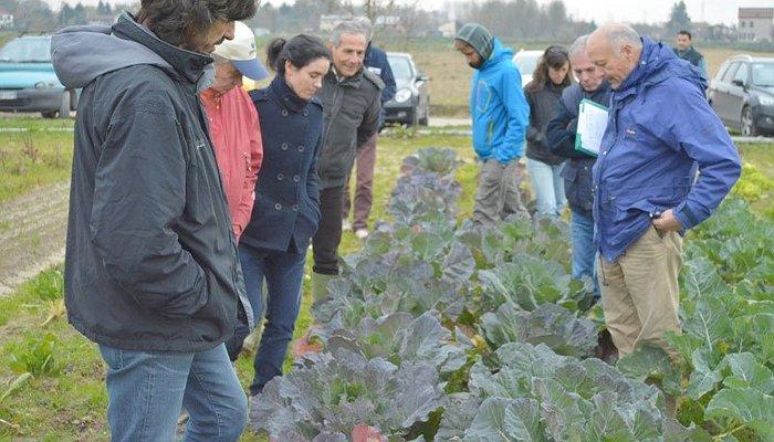 Il seme della Caresà - Autoproduzione di sementi di broccolo padovano e radicchio tipo di Castelfranco