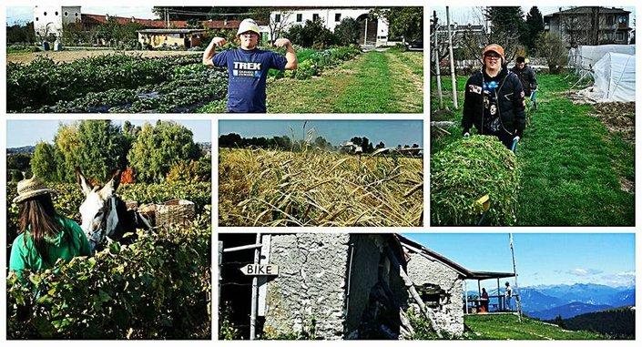 Assemblea Forum del'agricoltura sociale nel Veneto