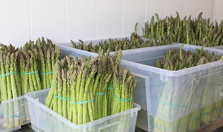 Offerta asparagi